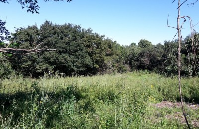 VISNJAN surroundings - Building land for sale in a quiet location